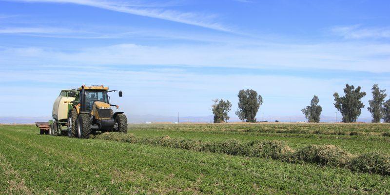 Conrad Agrar Consulting Heuernte in Kalifornien